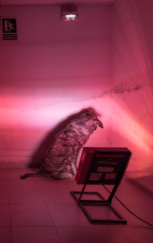 © Javier Ayuso | 3K Art | jäälphoto | ferias 2015 | fotografía | arte a un click | A1CFerias