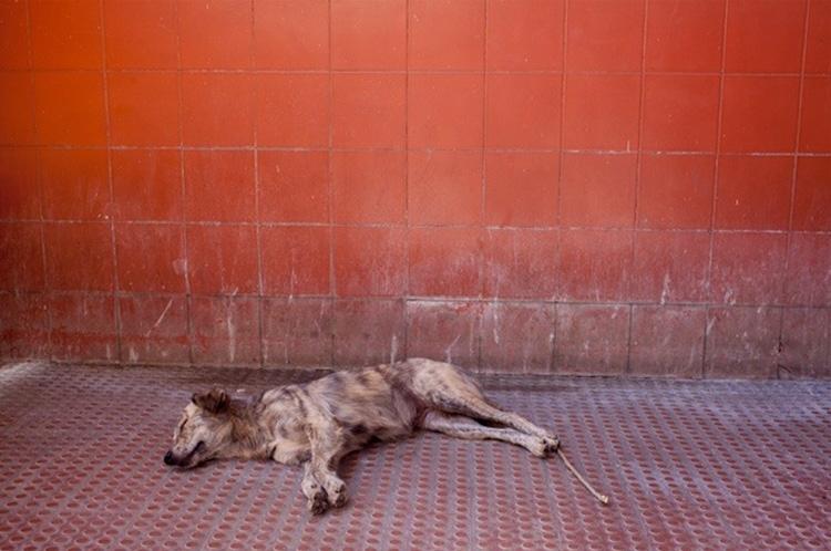 Cidade Partida | Catarina Botelho | Galería Silvestre| Arte a un Click | A1CExpos