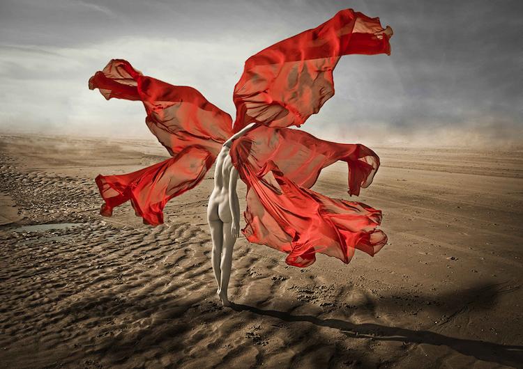 © Leila Amat | Flor de viento