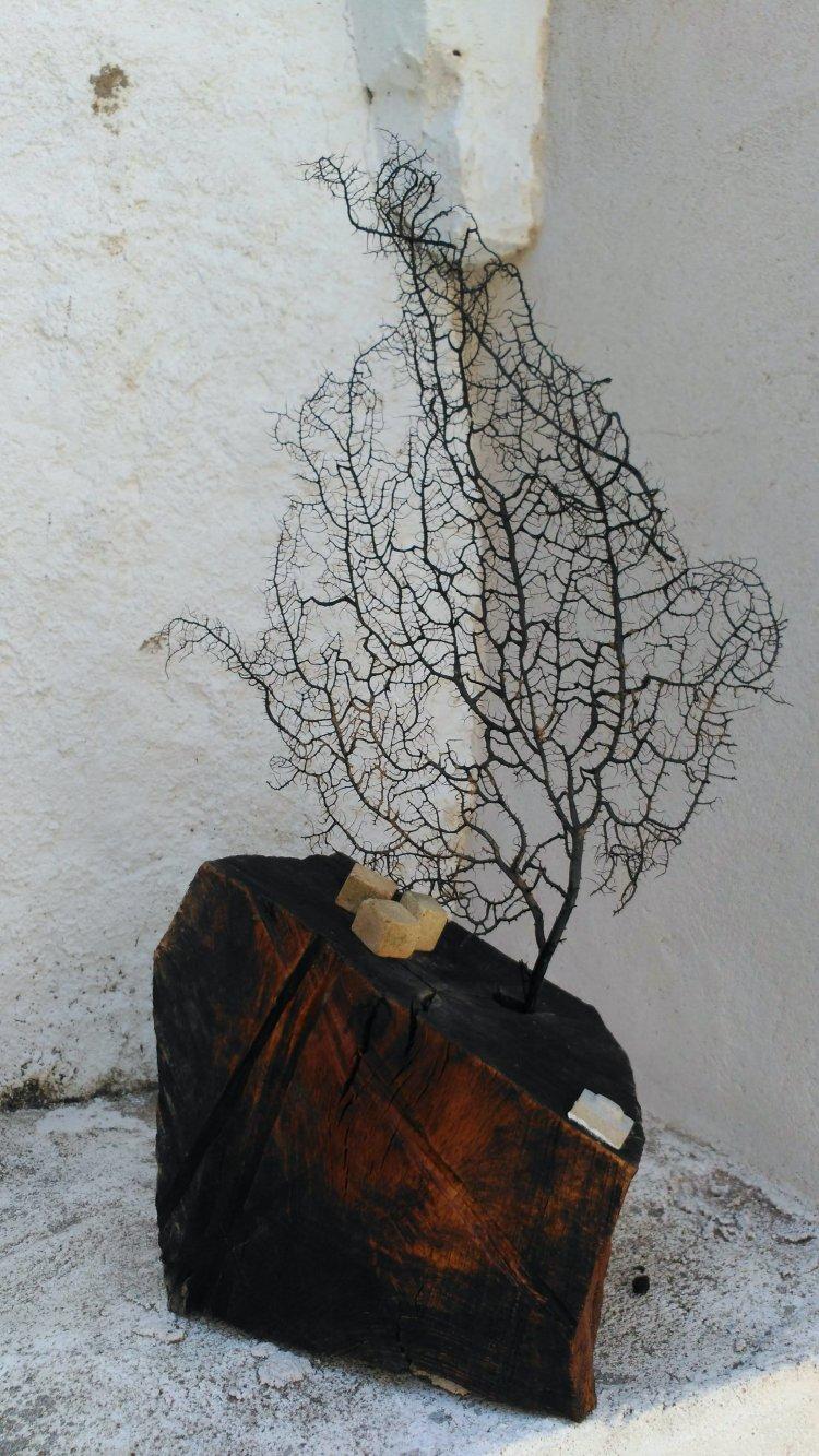 María Riera | Casa de las Conchas | Salamanca | Arte a un Click